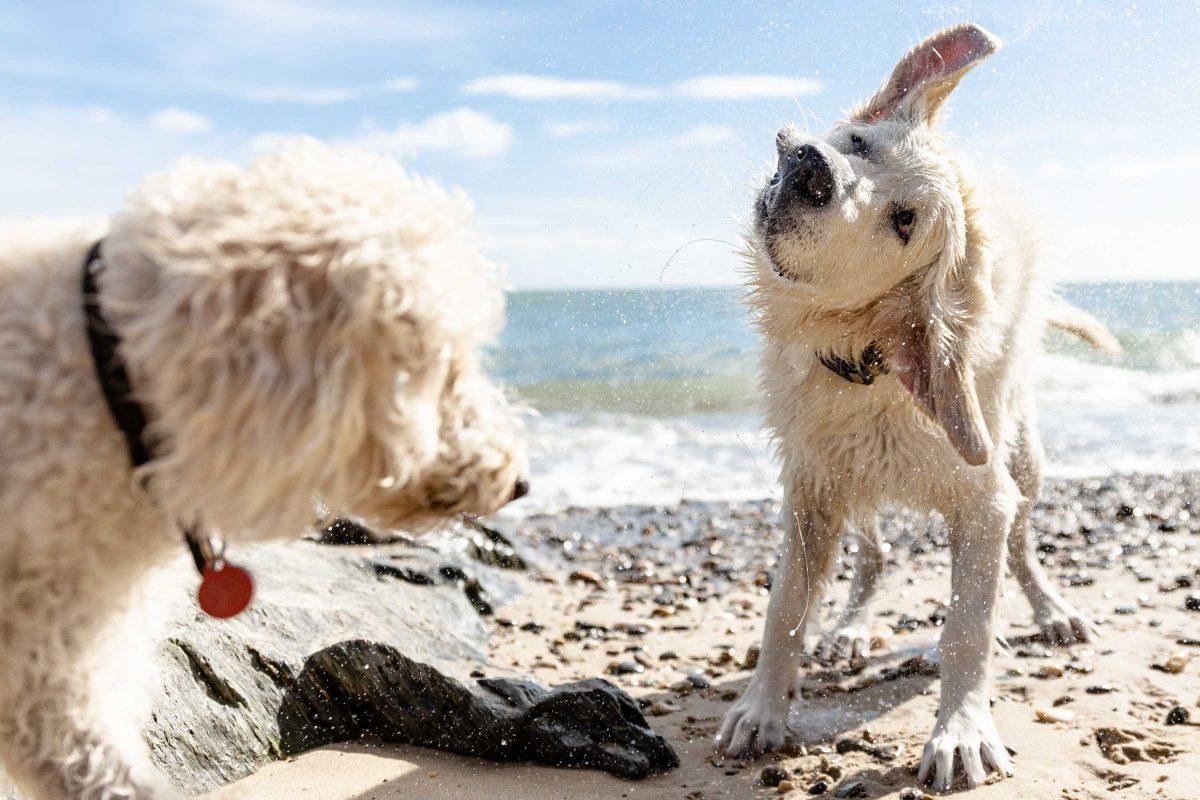 Tierfotografie am Strand für IRISH PURE Hundefutter